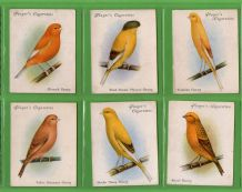 Tobacco Cigarette cards Birds, Parrots, Budgerigar, set